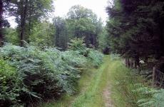 belgium-forest-near-spa