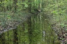 forest-stream-waardenburg
