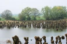 knott-willows-8001