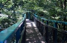 tree-tops-path-22-meters-high