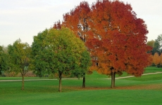 Autumn at The Golf Course