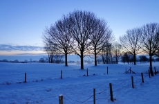 Snow Covered Field with Trees